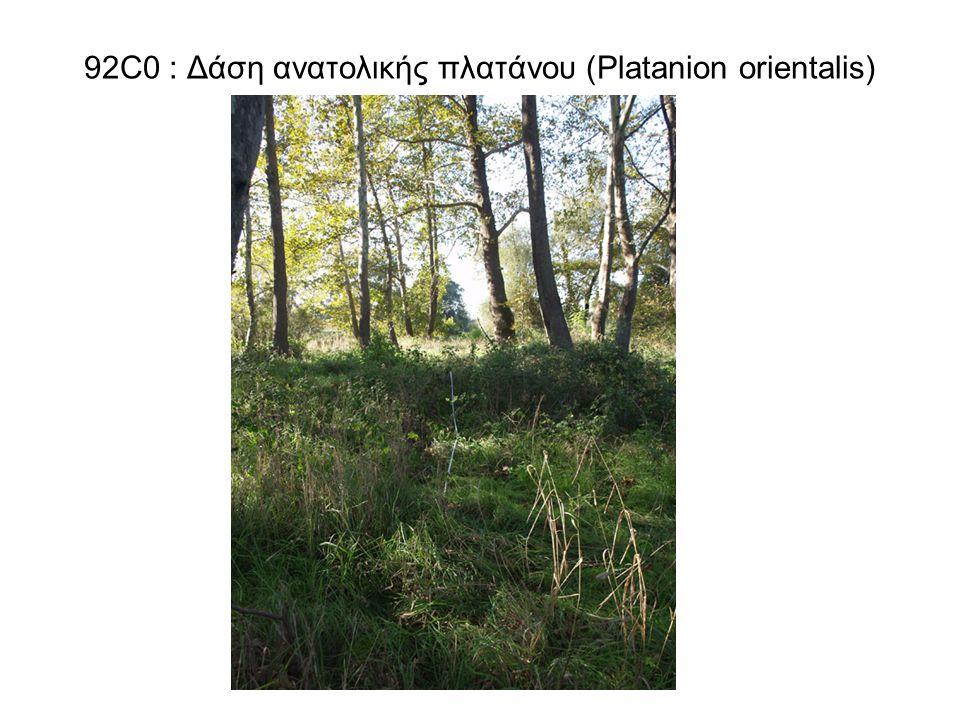 92C0 : Δάση ανατολικής πλατάνου (Platanion orientalis)