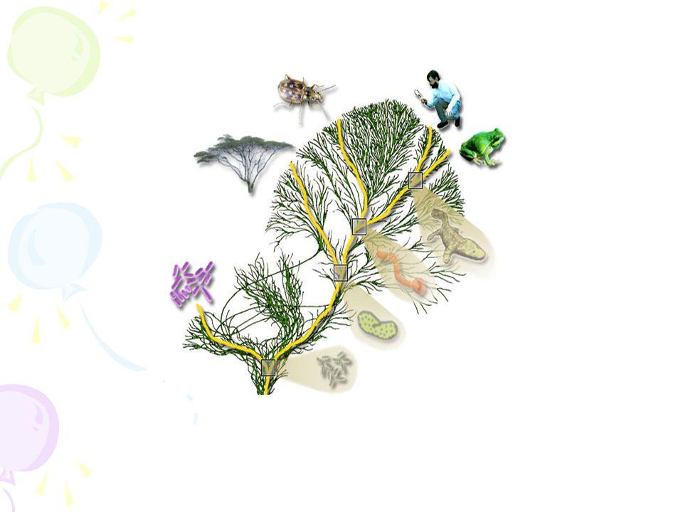 Ο Δαρβίνος Παρατήρησε τη μεγάλη ποικιλομορφία μεταξύ των διαφορετικών ειδών αλλά και μεταξύ των ατόμων ενός είδους φυτών ή ζώων, και συμπέρανε ότι όλα τα είδη των οργανισμών εξελίσσονται, δηλ.