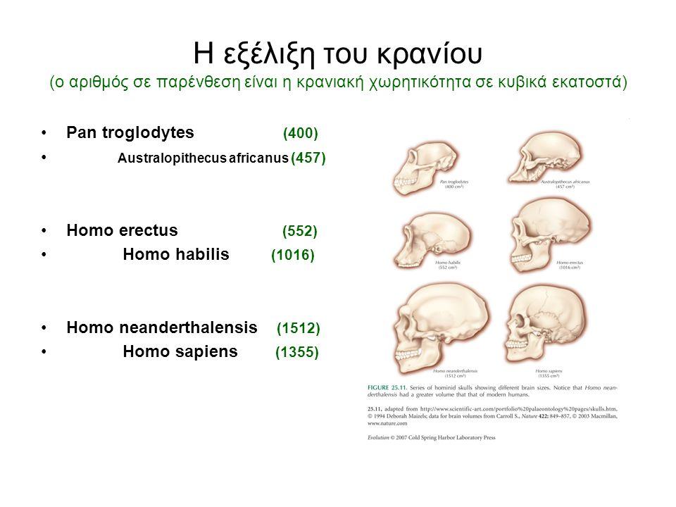 Η εξέλιξη του κρανίου (ο αριθμός σε παρένθεση είναι η κρανιακή χωρητικότητα σε κυβικά εκατοστά) Pan troglodytes (400) Australopithecus africanus (457) Homo erectus (552) Homo habilis (1016) Homo neanderthalensis (1512) Homo sapiens (1355)