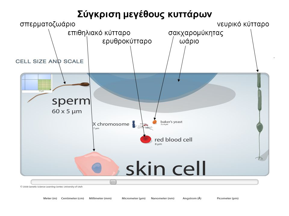 Η εξέλιξη του καλαμποκιού