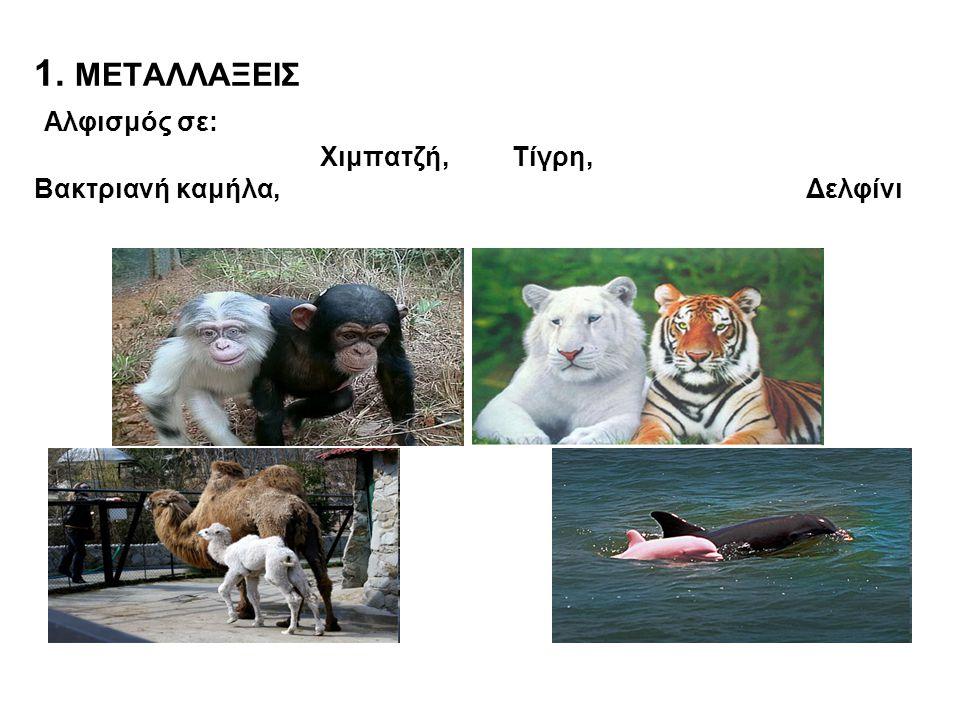 1. ΜΕΤΑΛΛΑΞΕΙΣ Αλφισμός σε: Χιμπατζή, Τίγρη, Βακτριανή καμήλα, Δελφίνι