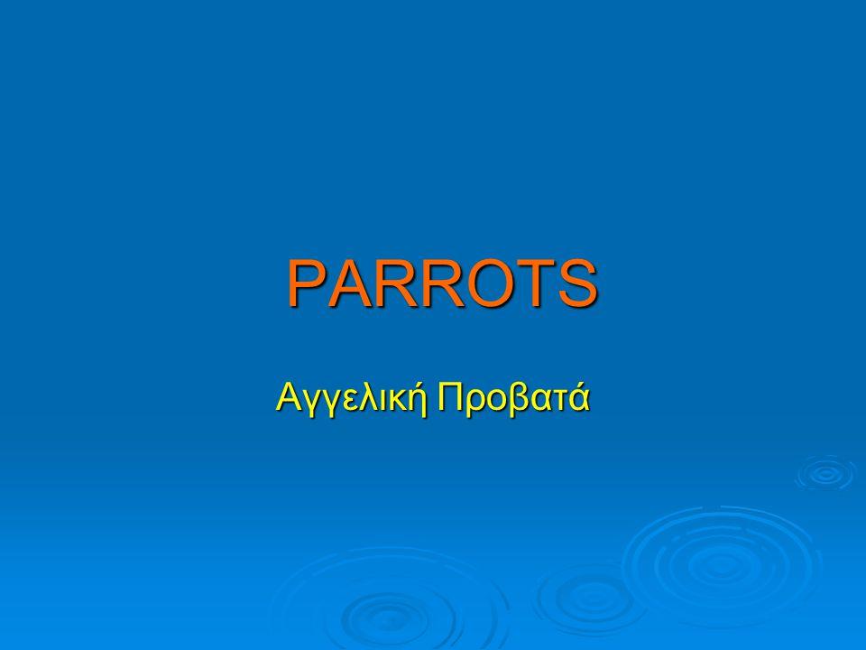 PARROTS Αγγελική Προβατά