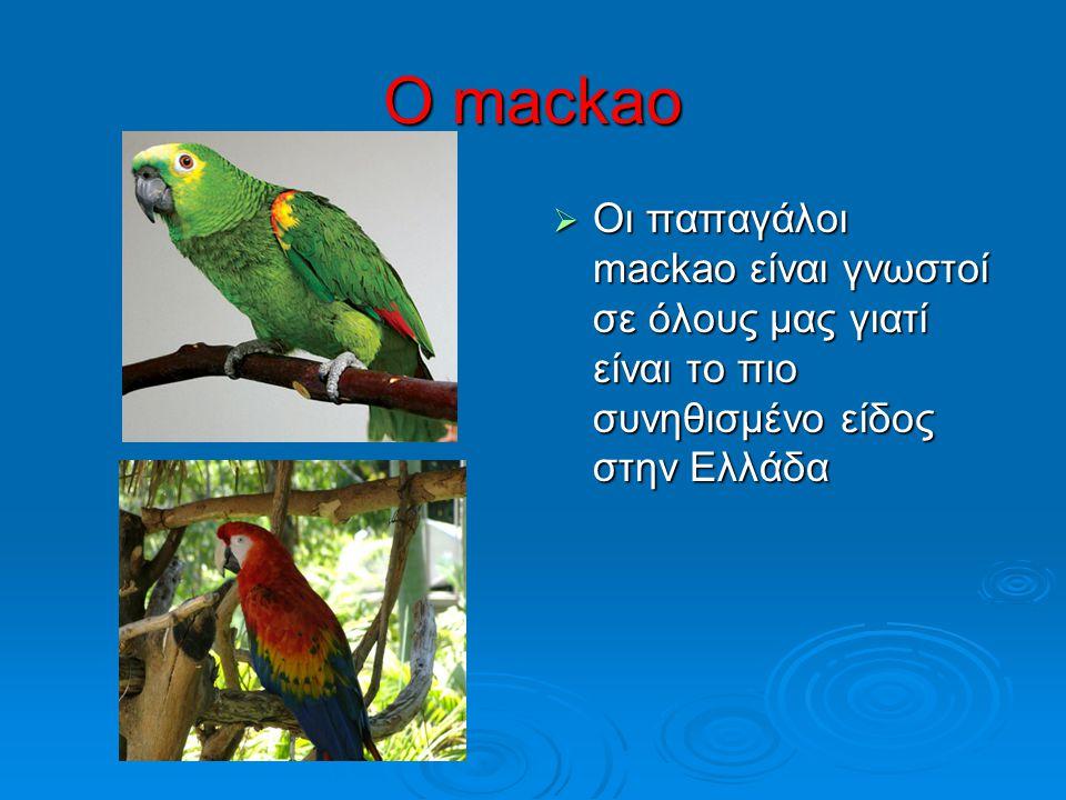 Ο mackao  Οι παπαγάλοι mackao είναι γνωστοί σε όλους μας γιατί είναι το πιο συνηθισμένο είδος στην Ελλάδα