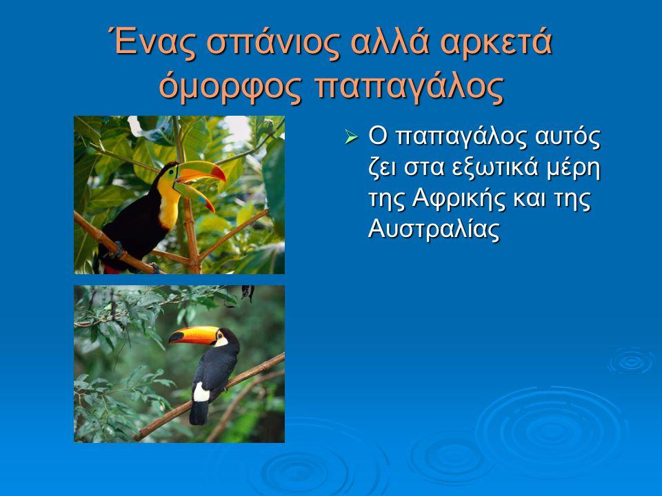 Ένας σπάνιος αλλά αρκετά όμορφος παπαγάλος  Ο παπαγάλος αυτός ζει στα εξωτικά μέρη της Αφρικής και της Αυστραλίας