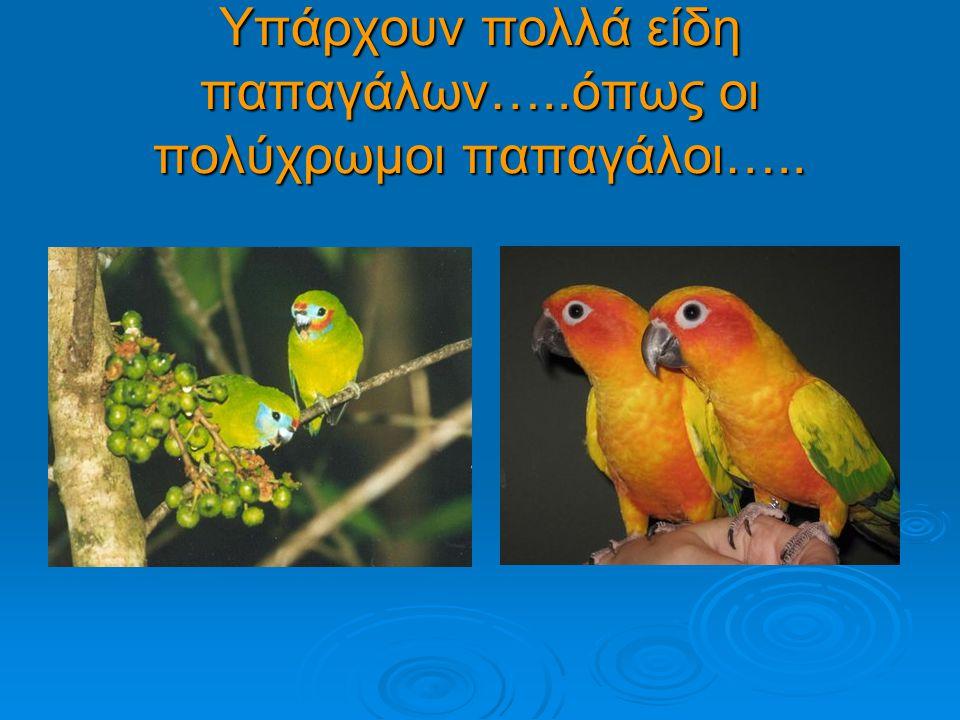 Υπάρχουν πολλά είδη παπαγάλων…..όπως οι πολύχρωμοι παπαγάλοι…..