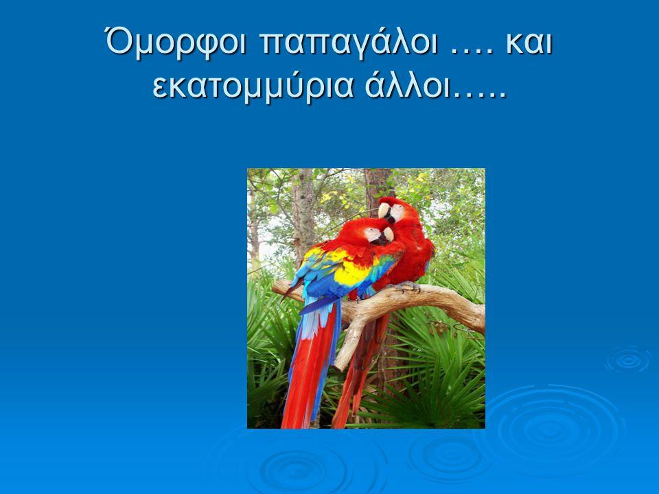 Όμορφοι παπαγάλοι …. και εκατομμύρια άλλοι…..
