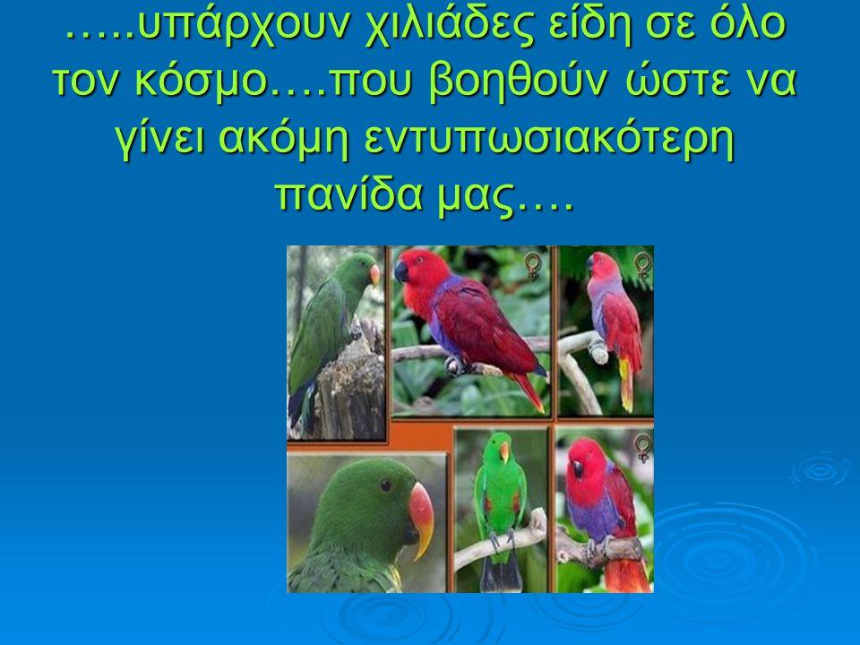 …..υπάρχουν χιλιάδες είδη σε όλο τον κόσμο….που βοηθούν ώστε να γίνει ακόμη εντυπωσιακότερη πανίδα μας….