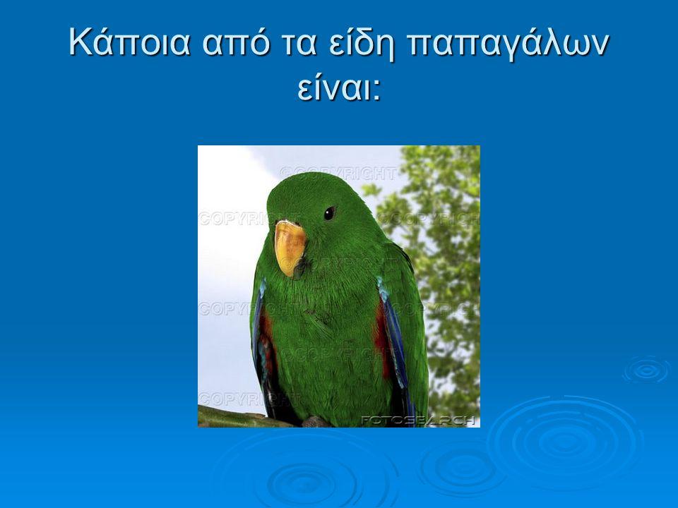 Κάποια από τα είδη παπαγάλων είναι: