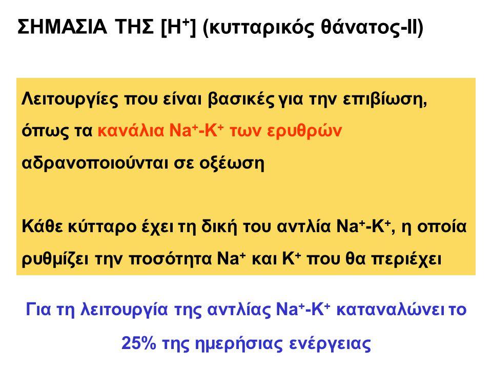 ΣΗΜΑΣΙΑ ΤΗΣ [Η + ] (κυτταρικός θάνατος-ΙΙ) Λειτουργίες που είναι βασικές για την επιβίωση, όπως τα κανάλια Na + -K + των ερυθρών αδρανοποιούνται σε οξέωση Κάθε κύτταρο έχει τη δική του αντλία Na + -K +, η οποία ρυθμίζει την ποσότητα Νa + και K + που θα περιέχει Για τη λειτουργία της αντλίας Na + -K + καταναλώνει το 25% της ημερήσιας ενέργειας