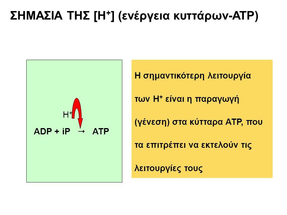 ΣΗΜΑΣΙΑ ΤΗΣ [Η + ] (ενέργεια κυττάρων-ATP) ADP + iP  ATP H+H+ Η σημαντικότερη λειτουργία των Η + είναι η παραγωγή (γένεση) στα κύτταρα ATP, που τα επ
