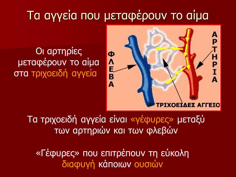 Τα αγγεία που μεταφέρουν το αίμα Οι αρτηρίες μεταφέρουν το αίμα στα τριχοειδή αγγεία Τα τριχοειδή αγγεία είναι «γέφυρες» μεταξύ των αρτηριών και των φ