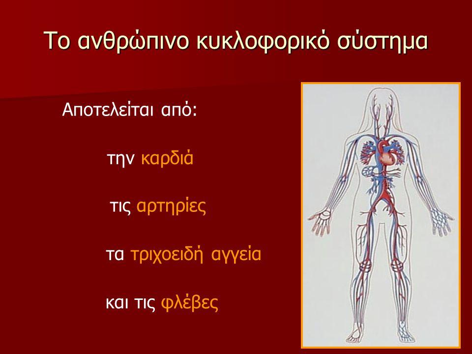 Το ανθρώπινο κυκλοφορικό σύστημα Αποτελείται από: την καρδιά τις αρτηρίες τα τριχοειδή αγγεία και τις φλέβες