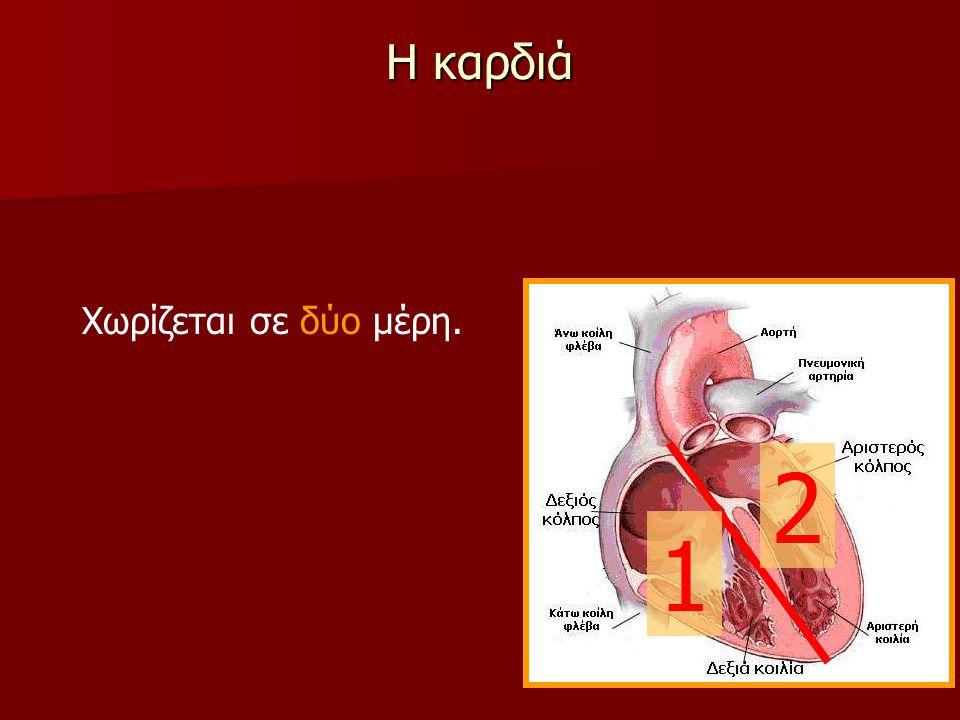 Η καρδιά Χωρίζεται σε δύο μέρη. Κάθε μέρος περιέχει έναν άνω θάλαμο (τον κόλπο)