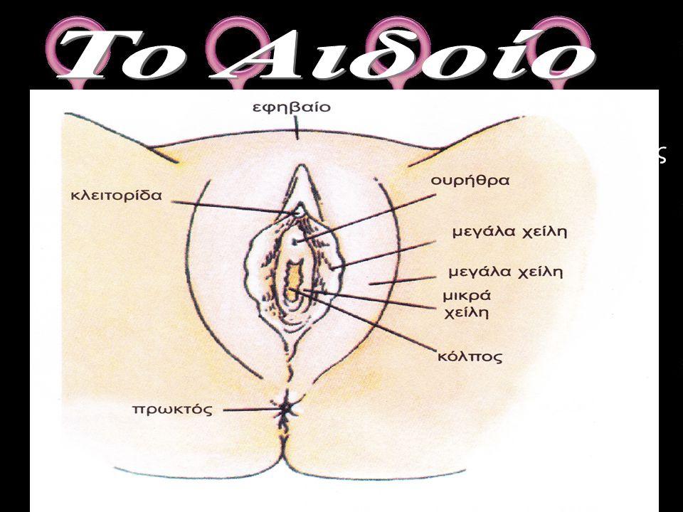 Το αιδοίο ουσιαστικά είναι τα εξωτερικά γεννητικά όργανα της γυναίκας, τα οποία καλύπτουν τα ανοίγματα του κόλπου και της ουρήθρας. Αποτελείται απο δύ