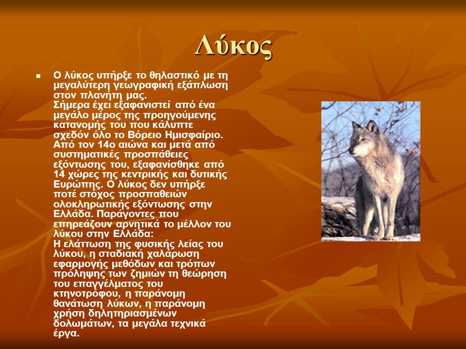 Λύκος Ο λύκος υπήρξε το θηλαστικό με τη μεγαλύτερη γεωγραφική εξάπλωση στον πλανήτη μας. Σήμερα έχει εξαφανιστεί από ένα μεγάλο μέρος της προηγούμενης
