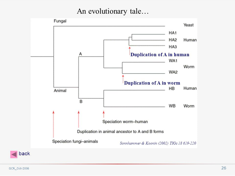 GCR_Oct-2006 26 An evolutionary tale… Duplication of A in worm Duplication of A in human Sonnhammer & Koonin (2002) TIGs 18 619-220 back