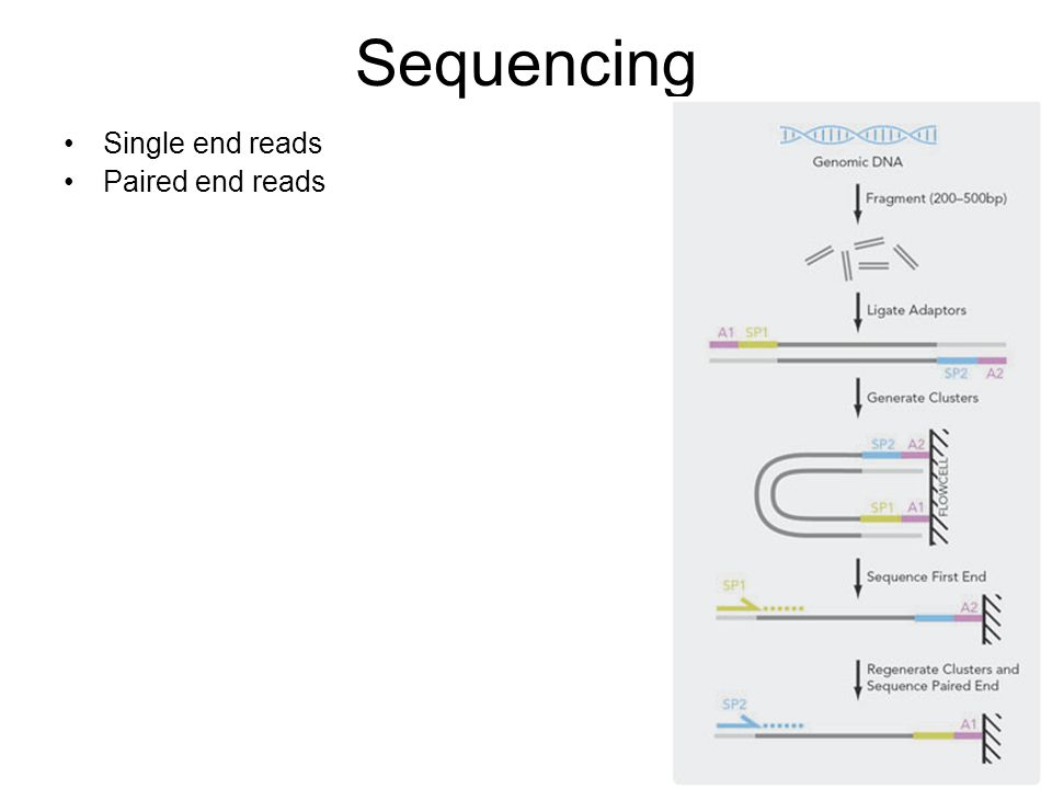 Sequencing Single end reads Paired end reads