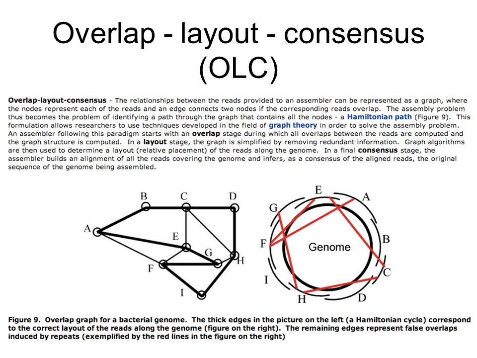 Overlap - layout - consensus (OLC)