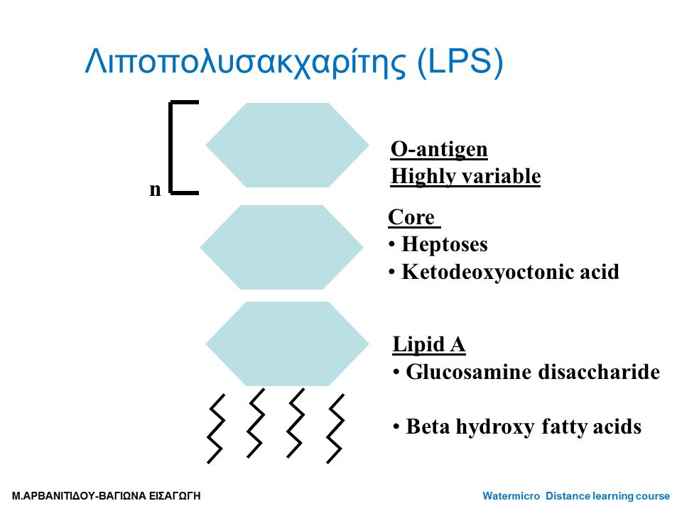 Λιποπολυσακχαρίτης (LPS) Lipid A Glucosamine disaccharide Beta hydroxy fatty acids Core Heptoses Ketodeoxyoctonic acid O-antigen Highly variable n