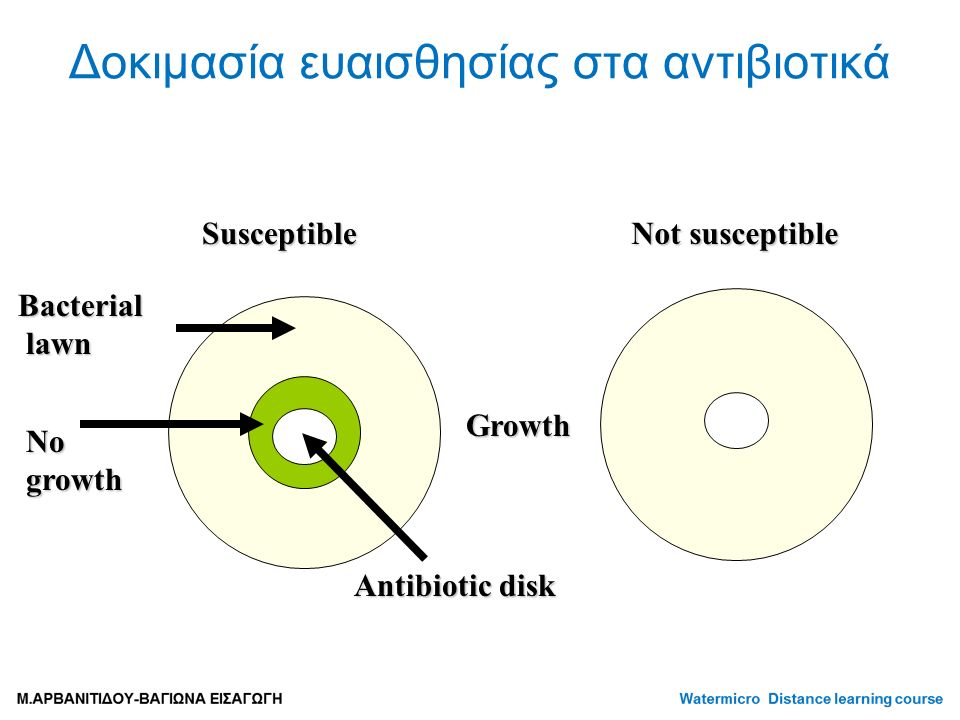 No growth Susceptible Not susceptible Bacterial lawn lawn Growth Antibiotic disk Δοκιμασία ευαισθησίας στα αντιβιοτικά