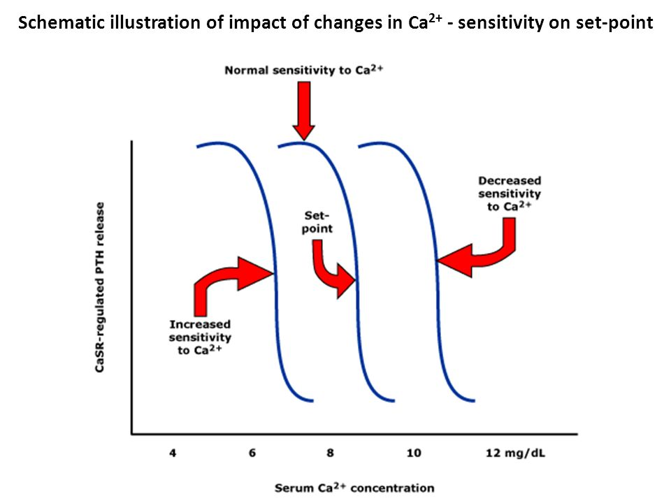 Schematic illustration of impact of changes in Ca 2+ - sensitivity on set-point