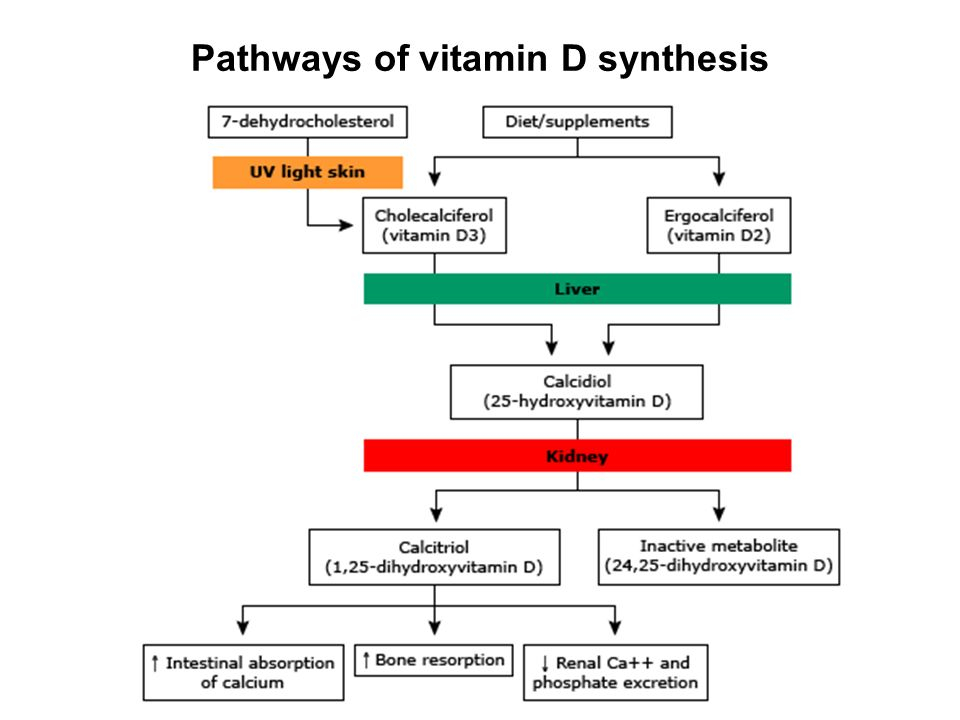Pathways of vitamin D synthesis