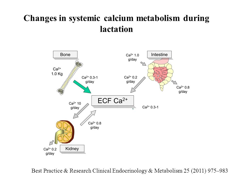 Changes in systemic calcium metabolism during lactation Best Practice & Research Clinical Endocrinology & Metabolism 25 (2011) 975–983