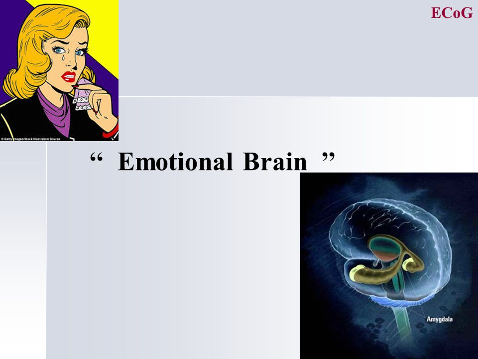 11 '' Emotional Brain '' ECoG