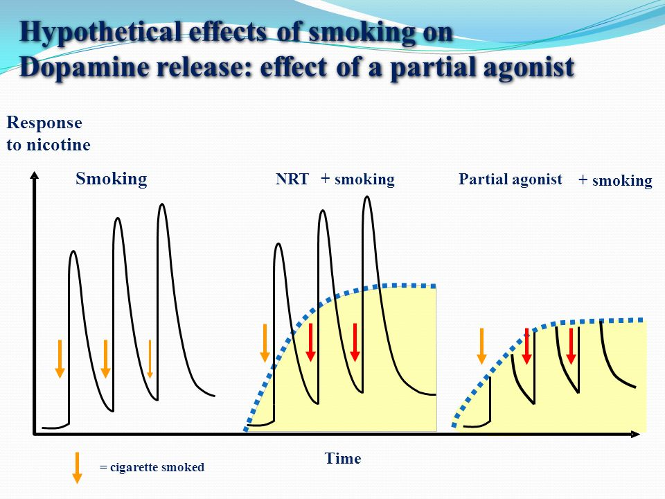 Hypothetical effects of smoking on Dopamine release: effect of a partial agonist Time Response to nicotine Smoking NRTPartial agonist = cigarette smoked + smoking