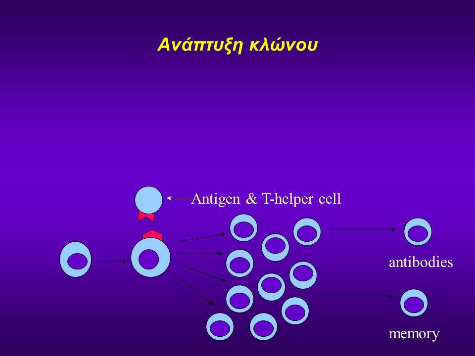 Ανάπτυξη κλώνου Antigen & T-helper cell memory antibodies