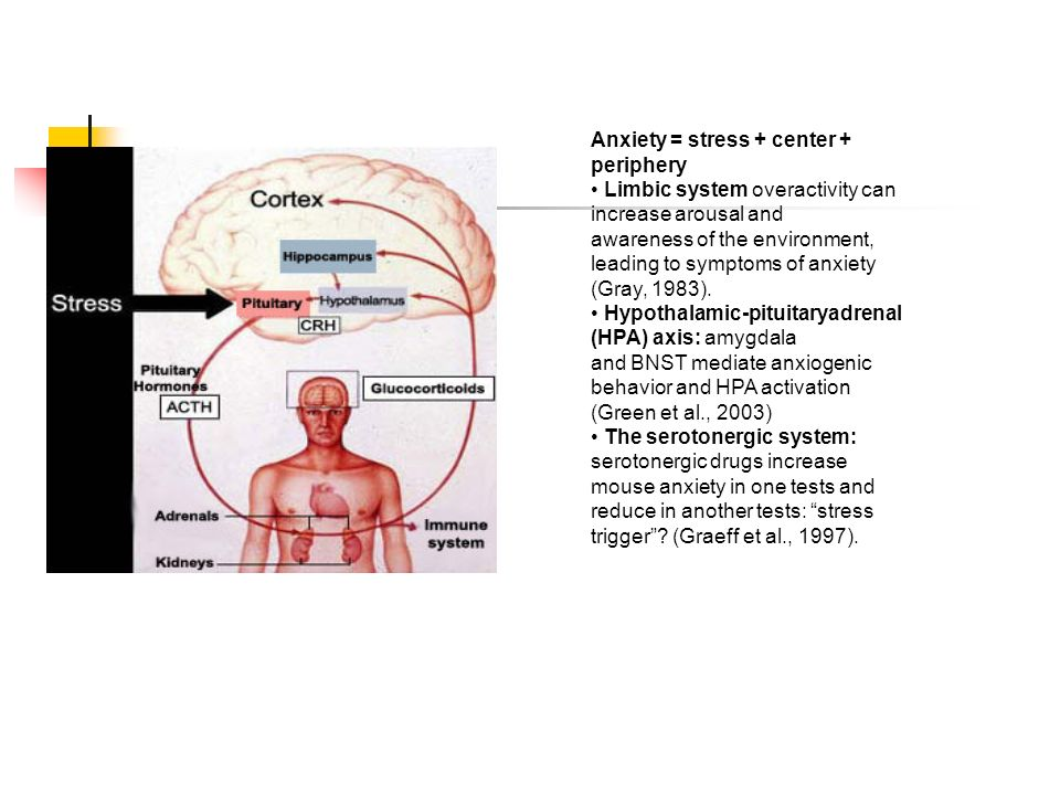 Anxiety = stress + center + periphery Limbic system overactivity can increase arousal and awareness of the environment, leading to symptoms of anxiety (Gray, 1983).