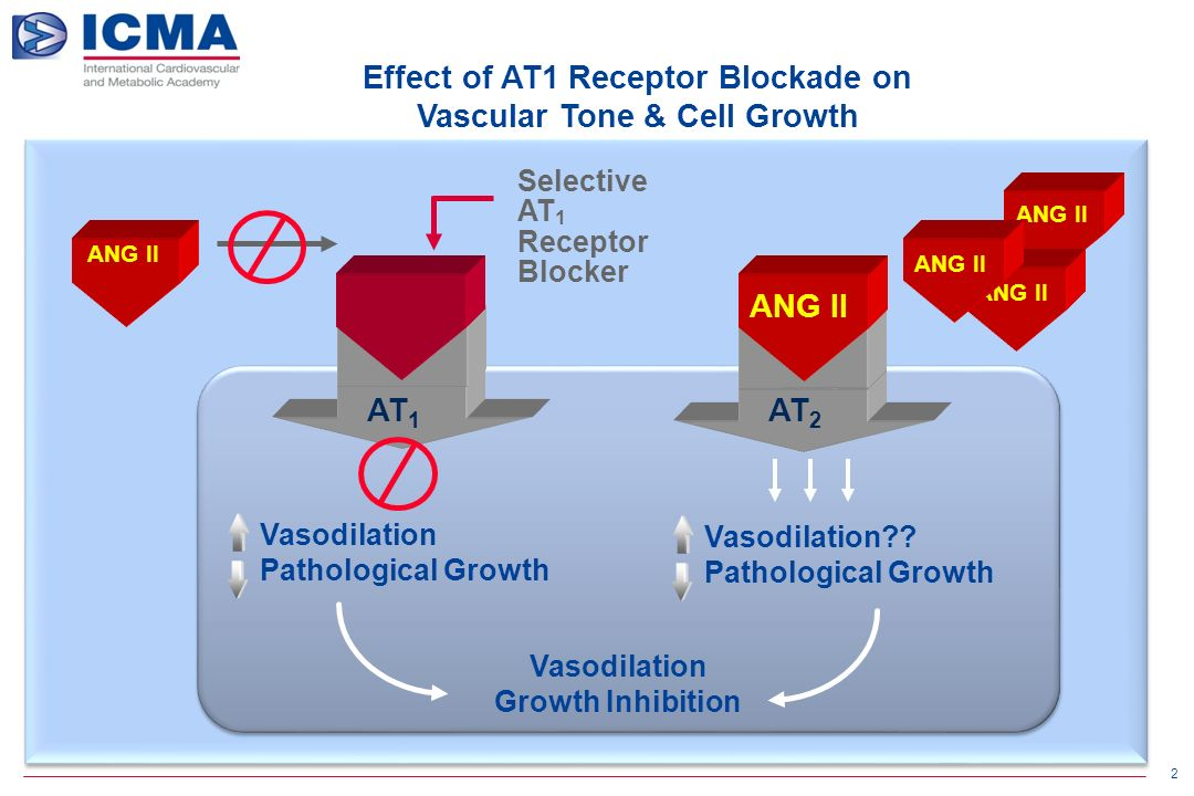 2 ANG II Selective AT 1 Receptor Blocker AT 1 AT 2 ANG II Vasodilation Growth Inhibition Vasodilation Pathological Growth Vasodilation .