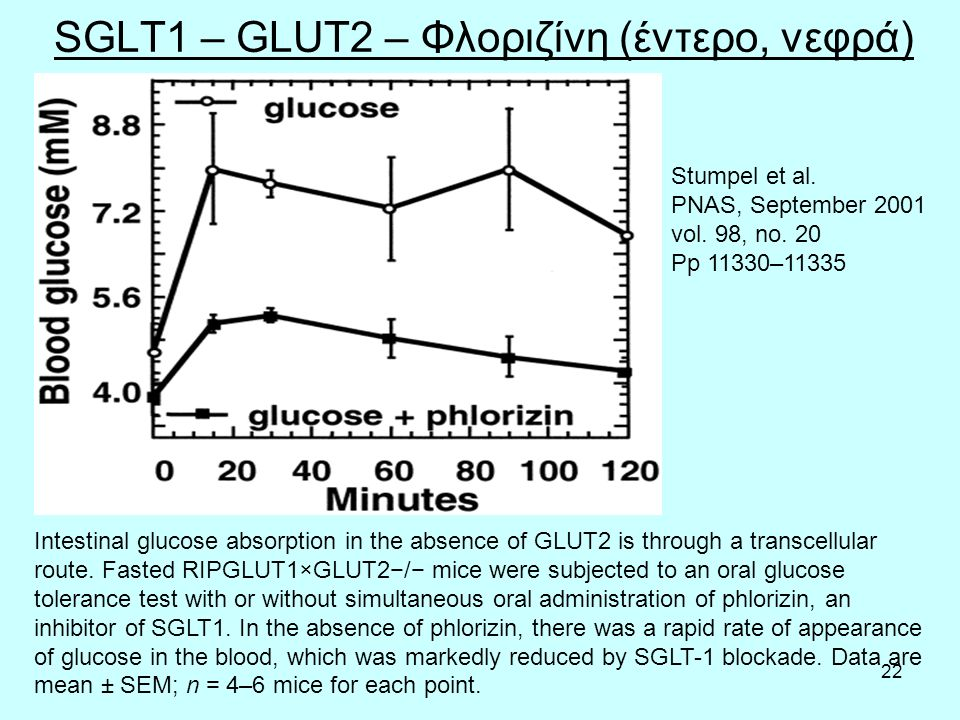 22 SGLT1 – GLUT2 – Φλοριζίνη (έντερο, νεφρά) Intestinal glucose absorption in the absence of GLUT2 is through a transcellular route.