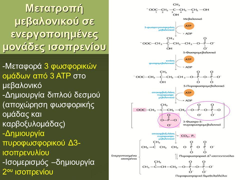 Image result for οδός μεβαλονικού οξέος