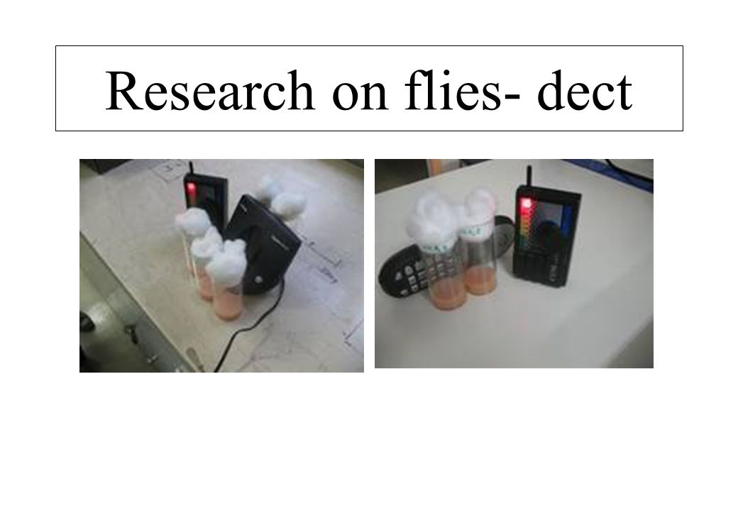 Research on flies- dect